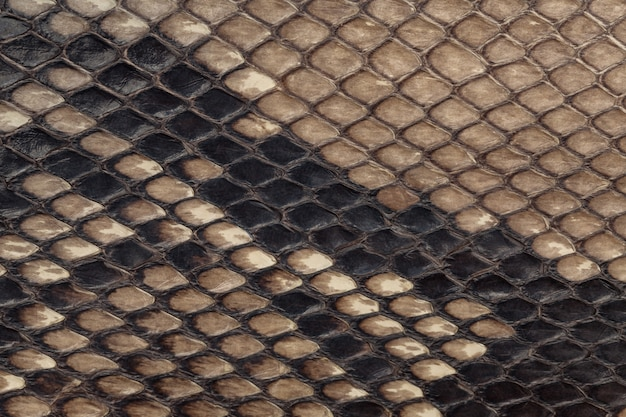 Genuine snakeskin, leather texture background, closeup , Premium Photo