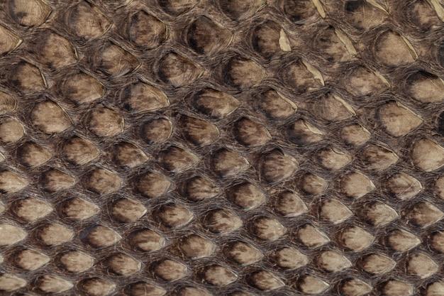 Genuine snakeskin leather texture background Premium Photo