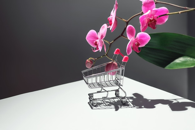 Geometric composition with pink orchid and a shopping basket on gray Premium Photo