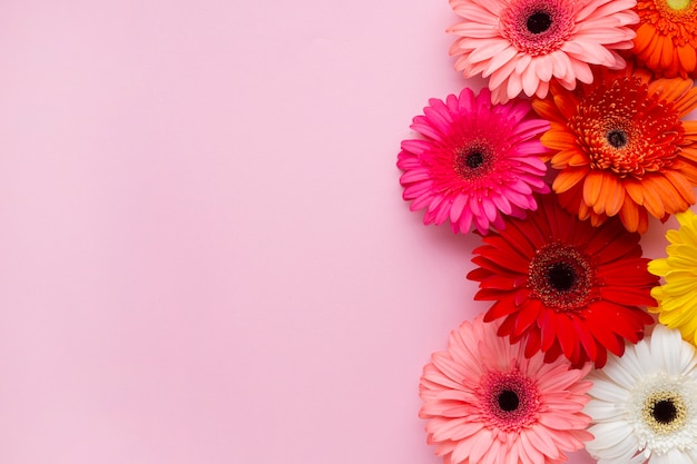 Gerbera daisy flowers with pink copy space background Free Photo