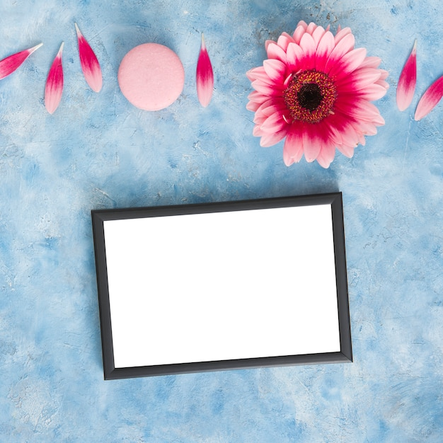 Gerbera flower with petals and blank frame Free Photo