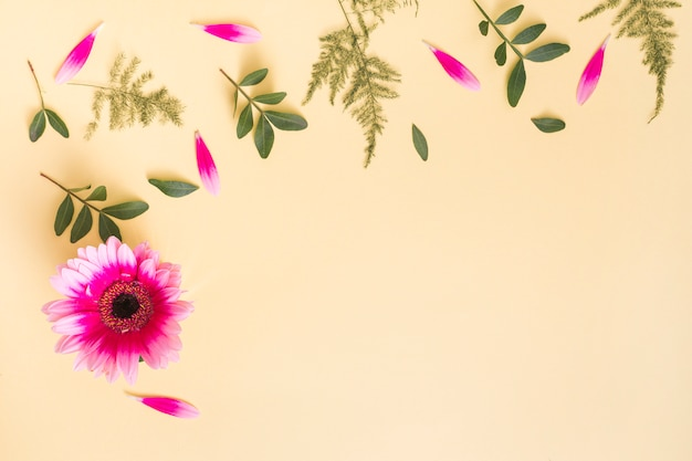 Gerbera flower with petals and plant branches on table Free Photo