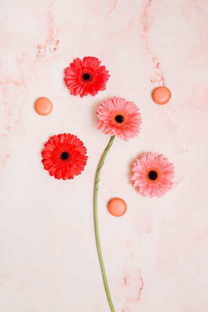 Gerbera flowers with cookies on table Free Photo