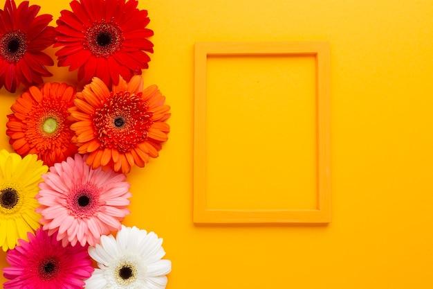 Gerbera flowers with frame on orange background Free Photo