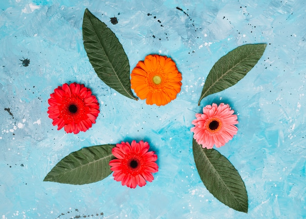Gerbera flowers with green leaves on table Free Photo
