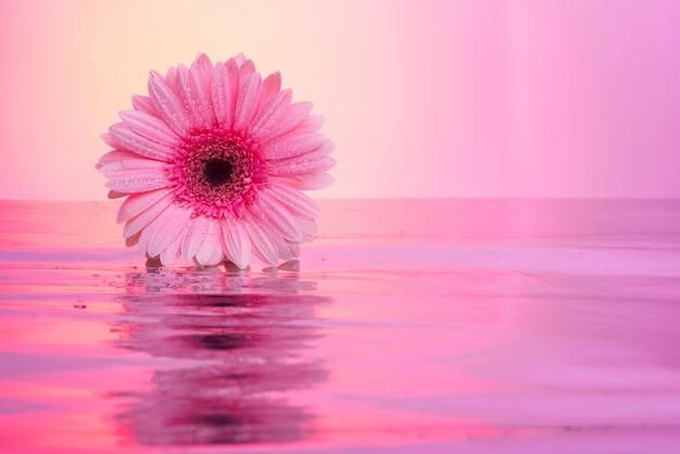 Gerbera Flowers Photo Free Download