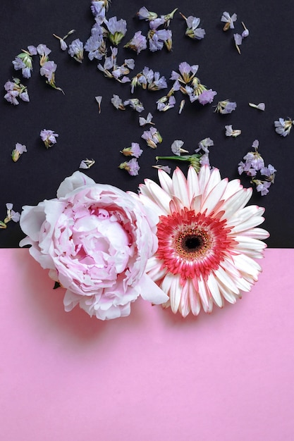 Gerbera and peony flower on pink and black backdrop Free Photo