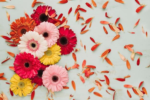 Gerberas heads and petals Free Photo