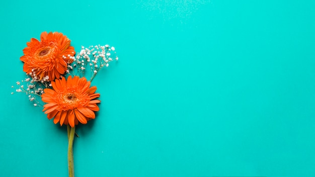 Gerberas and white flowers Free Photo