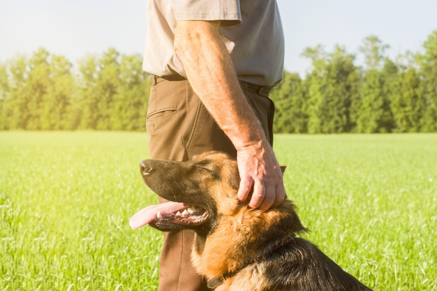 German shepherd stroking his master's hand outdoors in a field. Premium Photo