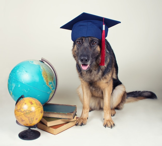 German shepherd wearing a graduation cap Premium Photo