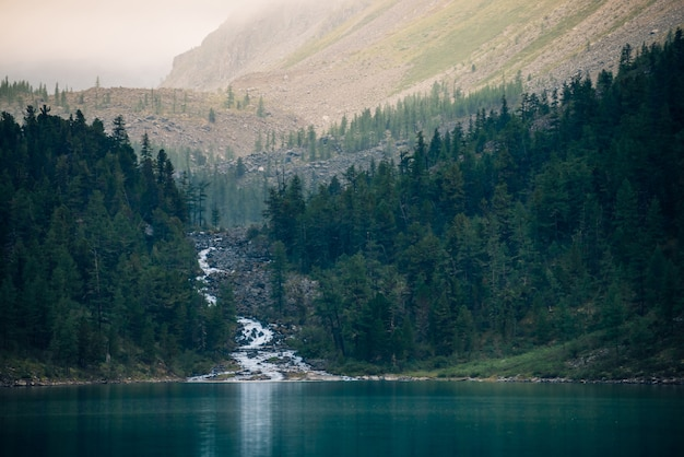 Ghostly forest near mountain lake in early morning. Premium Photo