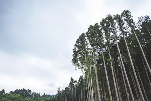 Гигантское дерево зеленая свежая природа на фоне парка пейзаж Premium Фотографии