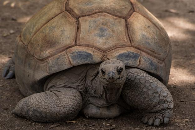 Giant turtle Premium Photo