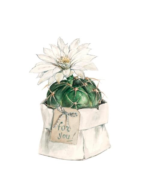 Gift cactus with flower Premium Photo