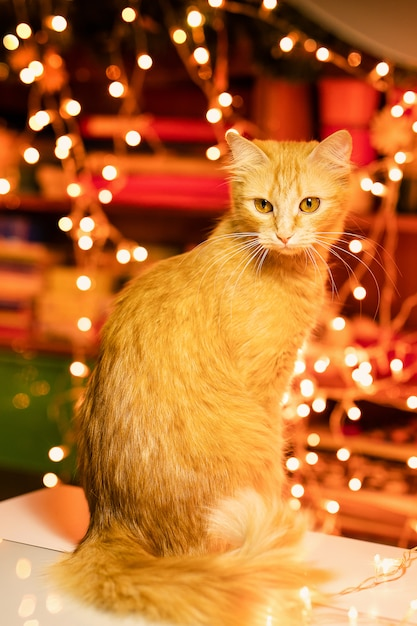 Ginger cat at home in christmas time Premium Photo