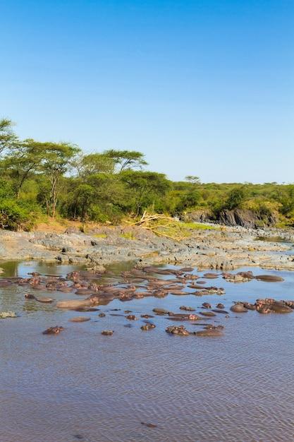 Бассейн гиппо в серенгети, танзания Premium Фотографии