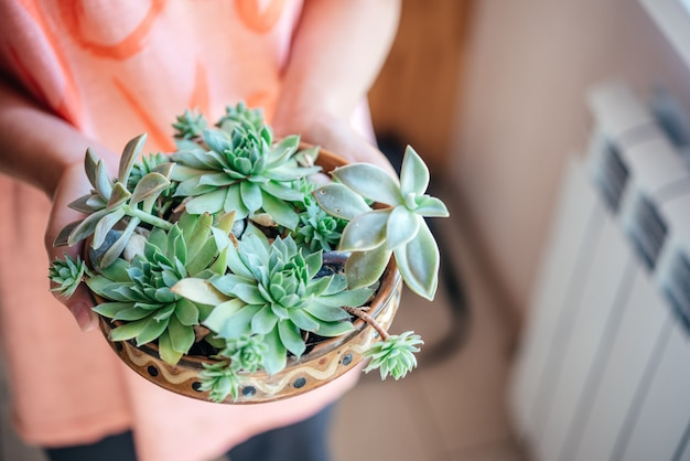 A girl holding different types of succulents in the pot Premium Photo