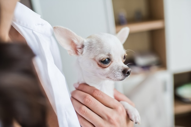 Girl holding a small pet dog Premium Photo
