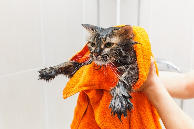 Girl holding a wet cat in an orange towel in the bathroom Premium Photo