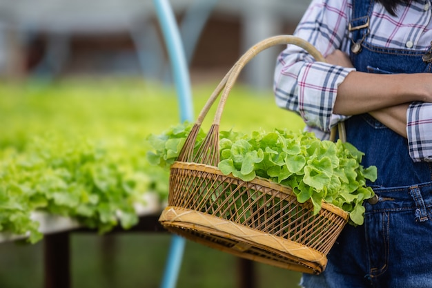 The girl is picking the lettuce into the basket in the nursery. Free Photo