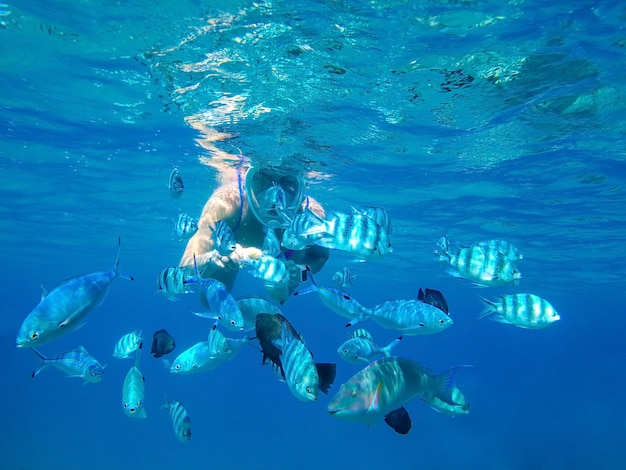 The girl in the mask under the water feeds the hands of predatory fish of the coral reef of the red sea Premium Photo