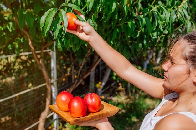 Девушка собирает спелый персик с дерева. Premium Фотографии
