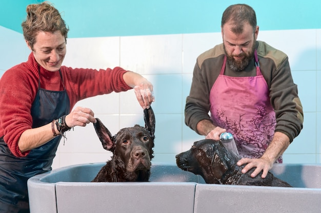 Girl playing grimace with her labrador retriever while her boy bathes his other dog. funny family moments Premium Photo