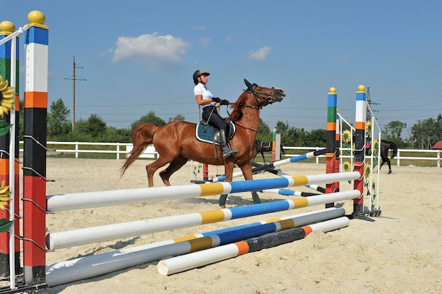 Girl riding a horse stops in front of the barrier on training. Premium Photo