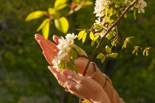 女の子は手で開花白い枝に触れます。桜の木。 Premium写真