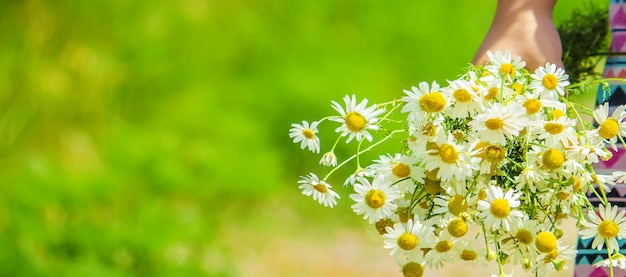 Girl with chamomile. photo. nature flowers. Premium Photo