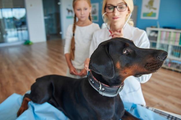 獣医でドーベルマンを持つ少女 無料写真