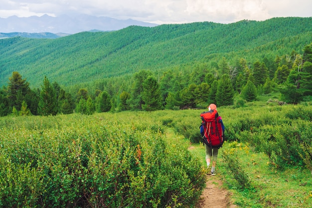 Girl with red large backpack go on footpath across green meadow to coniferous forest. Premium Photo
