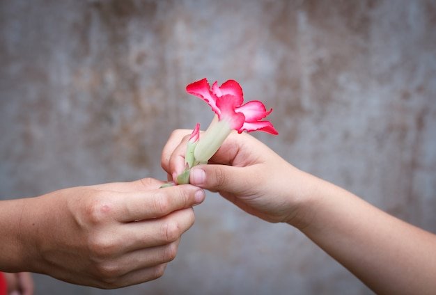 giving a flower photo premium download