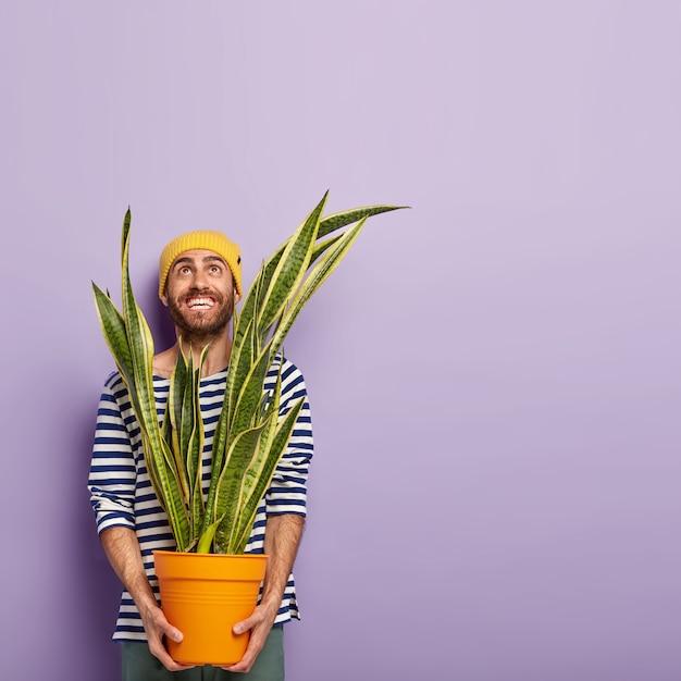 Felice l'uomo allegro guarda sopra con un sorriso a trentadue denti, vestito con abiti casual, tiene il vaso con la pianta di sansevieria, va a ripiantare, indossa un cappello giallo, ha la stoppia, posa su sfondo viola, spazio vuoto Foto Gratuite