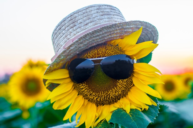 Glasses and a hat on a sunflower close-up. concept be special Premium Photo