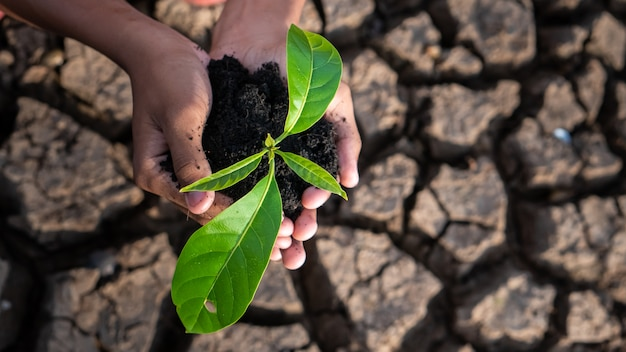 Global warming theme human hands defending green grass sprout rising from rainless cracked ground. Premium Photo