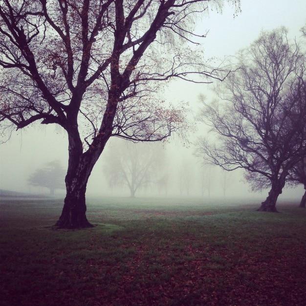 Gloomy trees Free Photo