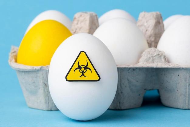 Gmo 화학 수정 된 식품 계란 클로즈업 무료 사진