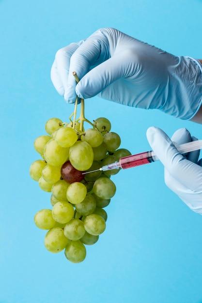Gmo 화학 변형 식품 포도 무료 사진