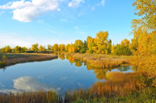 Gold  fall nature  trees lake forest landscape  Photo  Free