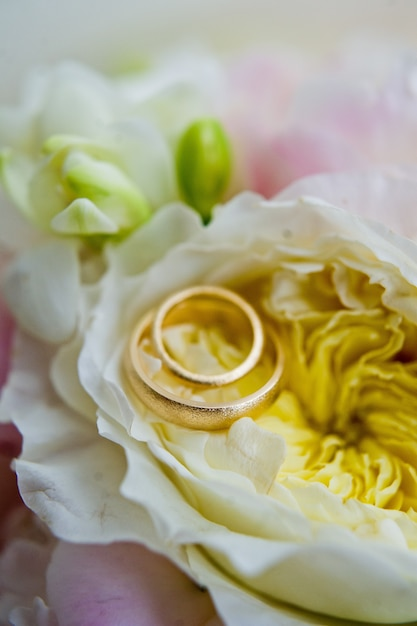 Gold wedding rings for the bride and groom. Premium Photo