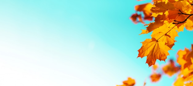 Golden autumn concept with copy space. sunny day, warm weather. Premium Photo