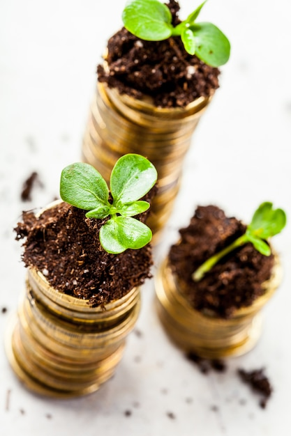 Golden coins in soil with young plant. money growth . Premium Photo