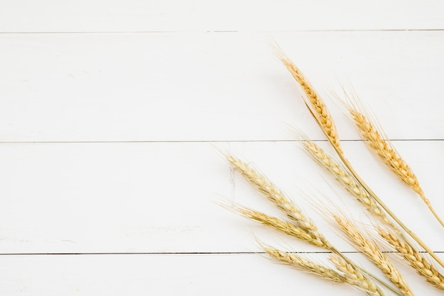 Golden color wheat ear in front of white wooden wall Free Photo