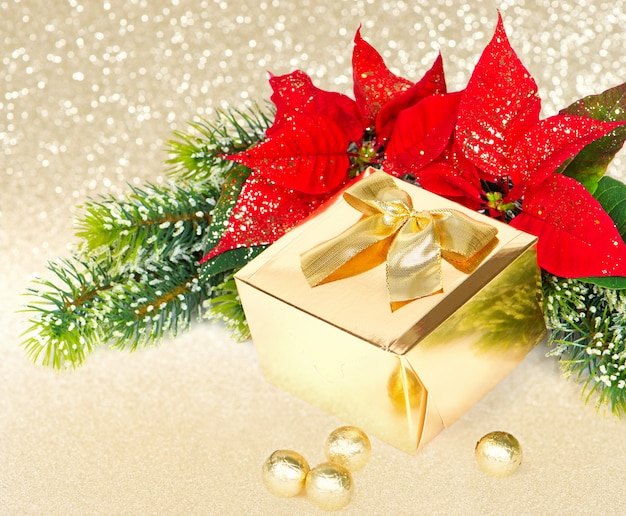 Golden gift and red christmas flower poinsettia Premium Photo
