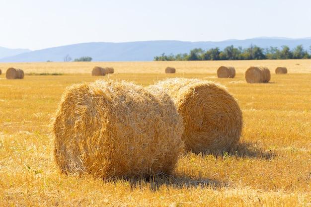 Golden hay bales in countryside Premium Photo