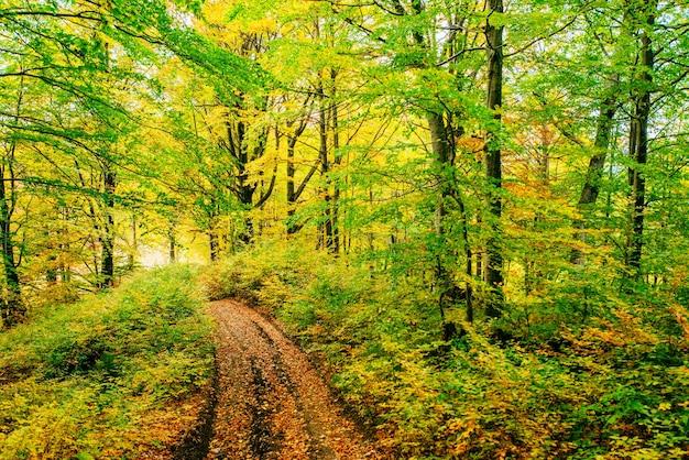 秋の緑の草に黄金の朝の太陽光線。 Premium写真