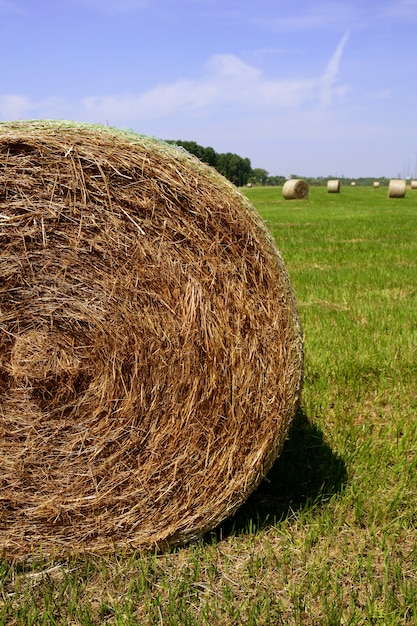 Golden straw hay bales in american countryside Premium Photo