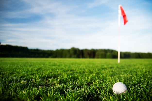 Golf ball in a grass field Free Photo